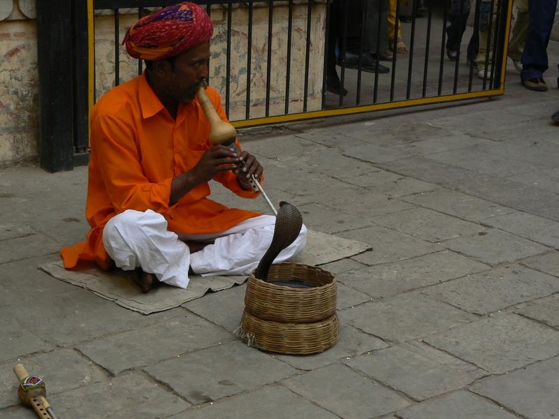 Charmeur de serpent à Jaipur