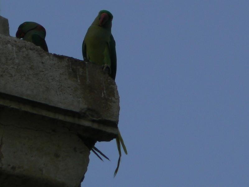 Les perroquets verts comme le printemps