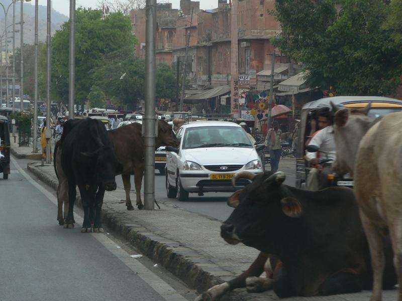 Dans les rues de Jaipur