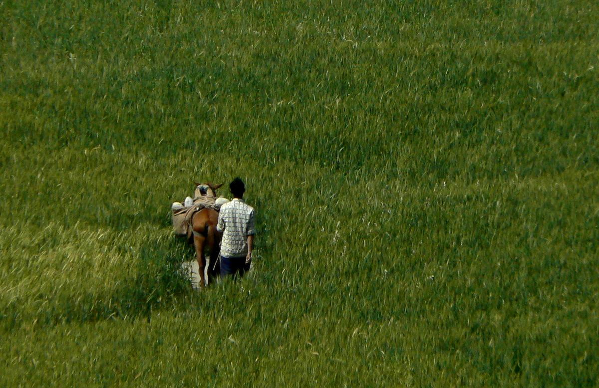 Un homme et un cheval dans les champs