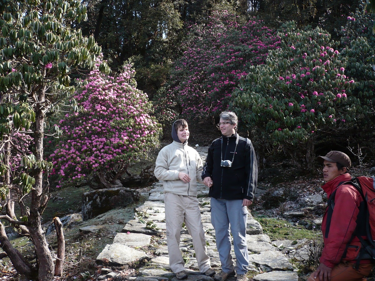 Le début du chemin est bordé de rhododendrons
